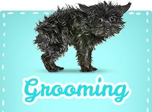 hl_grooming-1